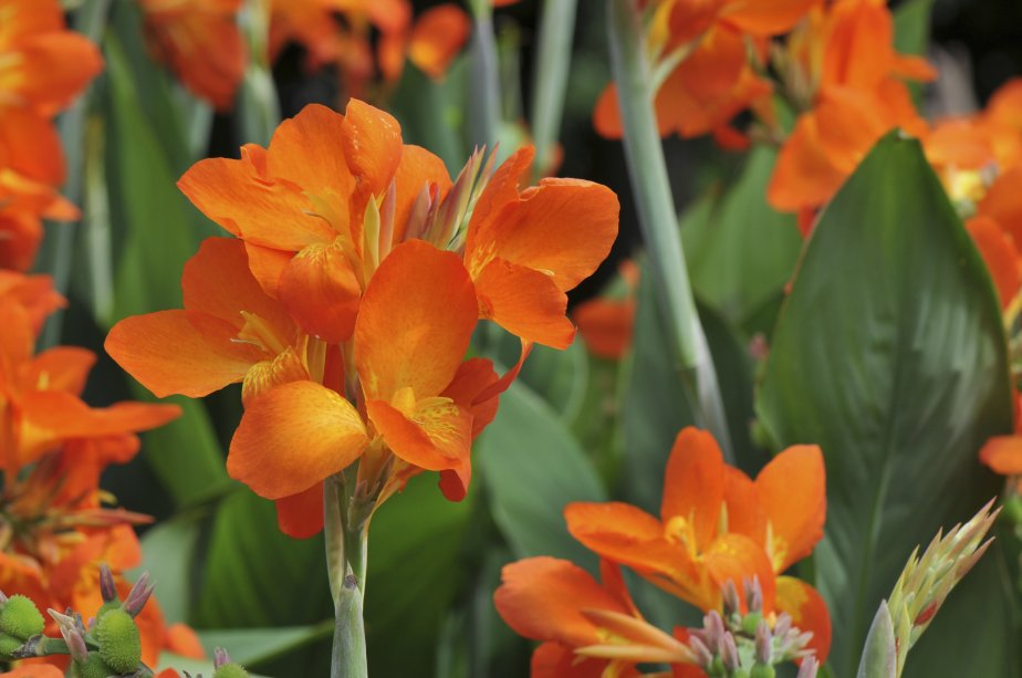 fleurs et plantes la rentr e pierre gingras jardiner. Black Bedroom Furniture Sets. Home Design Ideas