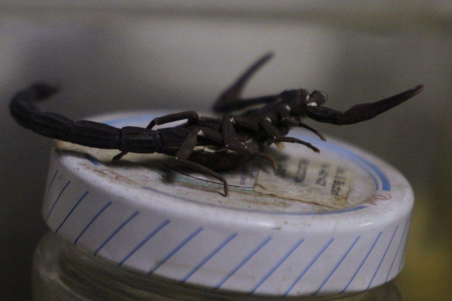 Plus de 600 scorpions de Mandchourie ont été saisis dans les... (Photo: Reuters)