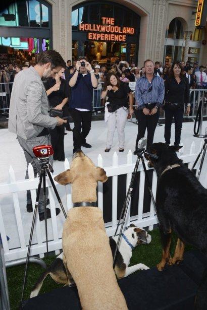 Des chiens jouent les paparazzis. | 1 octobre 2012