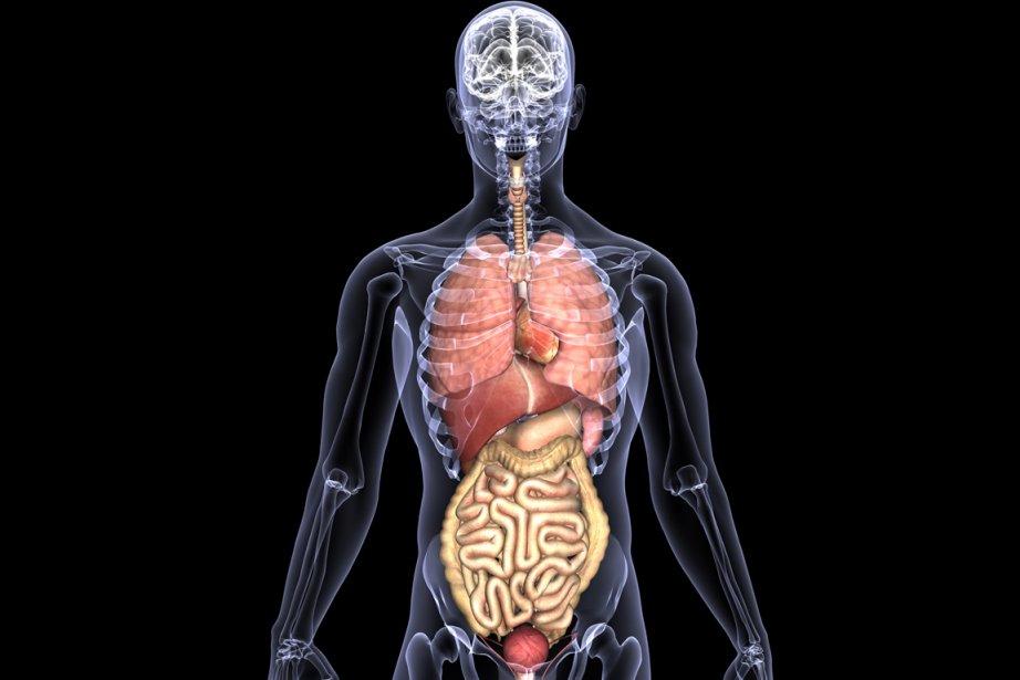 Au total, 106 879 greffes d'organes ont été... (Image RelaxNews)