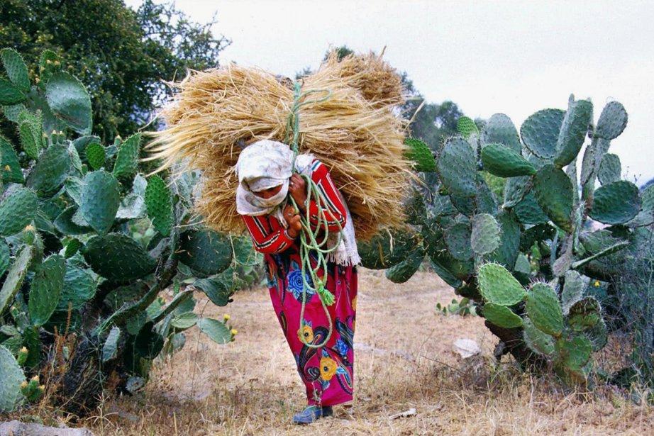 Une femme Berbère porte du blé sur son... (Photo AP)