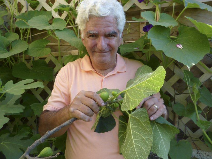 Francesco Maruca cultive des figuiers dans le quartier... (Photo: Pierre Gingras, La Presse)