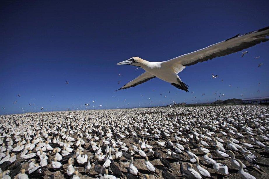 À vol d'oiseau... (Photo: fournie par Explora)