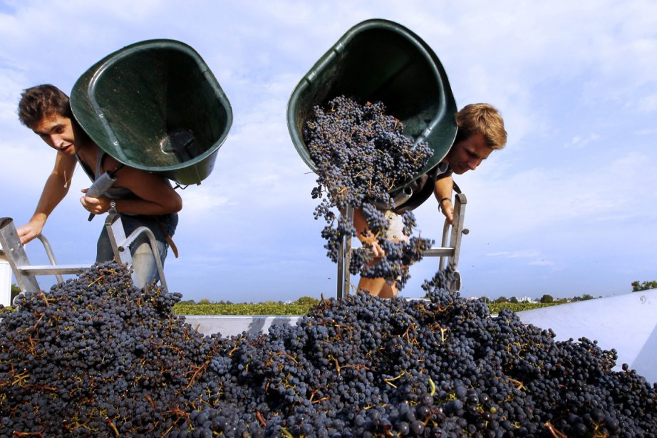 De l'avis de vignerons bordelais, le millésime 2012... (Photo AFP)