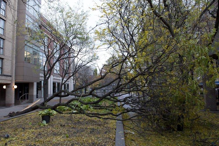 Un arbre a été déraciné dans le centre-ville... (Photo: PC)