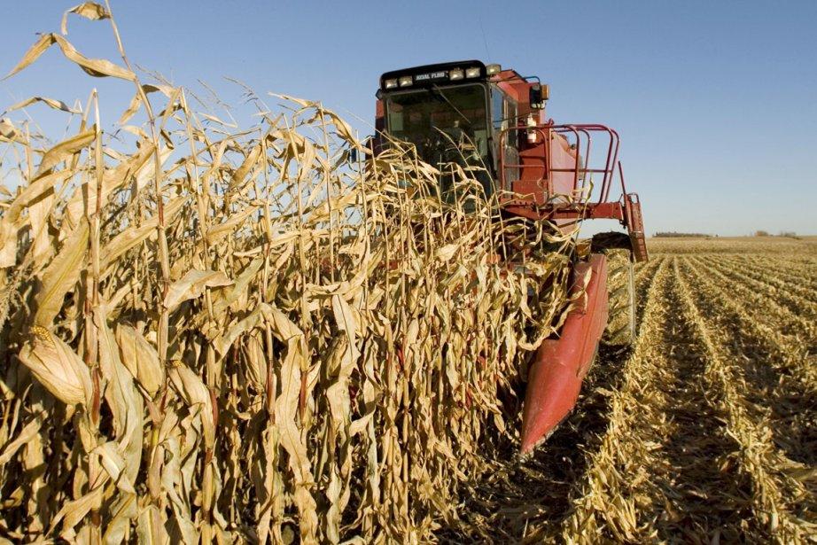 «Dans des régions où la culture de maïs-grain... (PHOTO ROBERT SKINNER, ARCHIVES LA PRESSE)