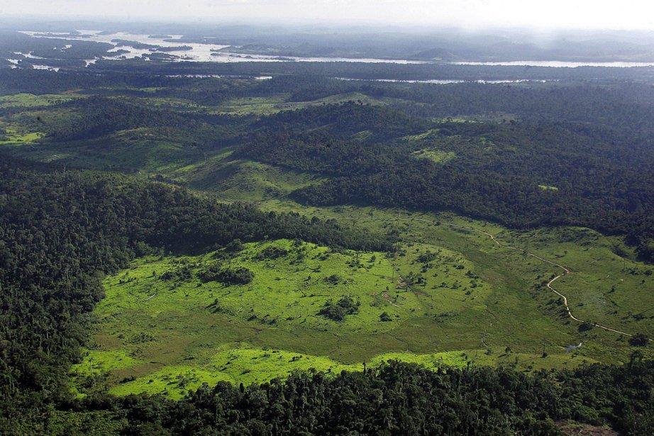 La forêt amazonienne est considérée comme l'une des... (Photo AFP)