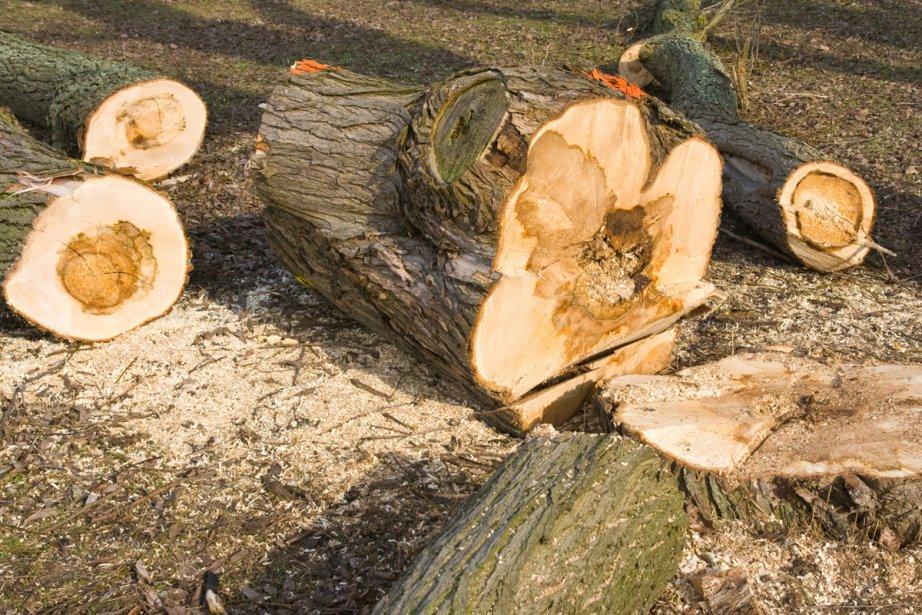 Le coût demandé pour abattre un arbre varie selon la... (Photo: photos.com)