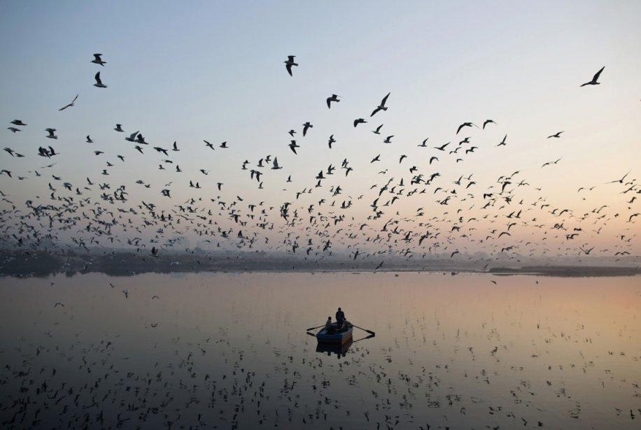 Oiseaux migrateurs sur la rivière Yamuna en Inde. | 7 décembre 2012