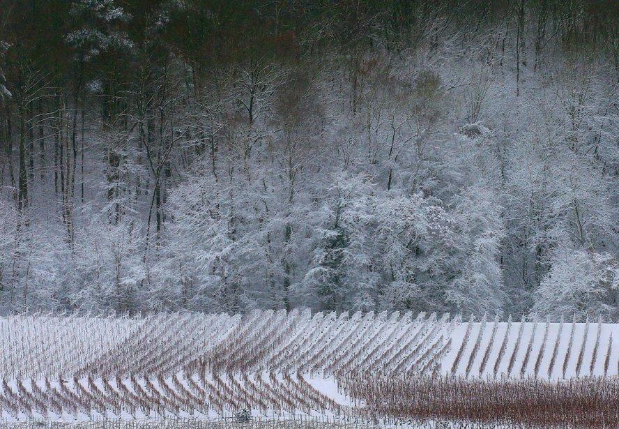 Reims, France | 13 décembre 2012
