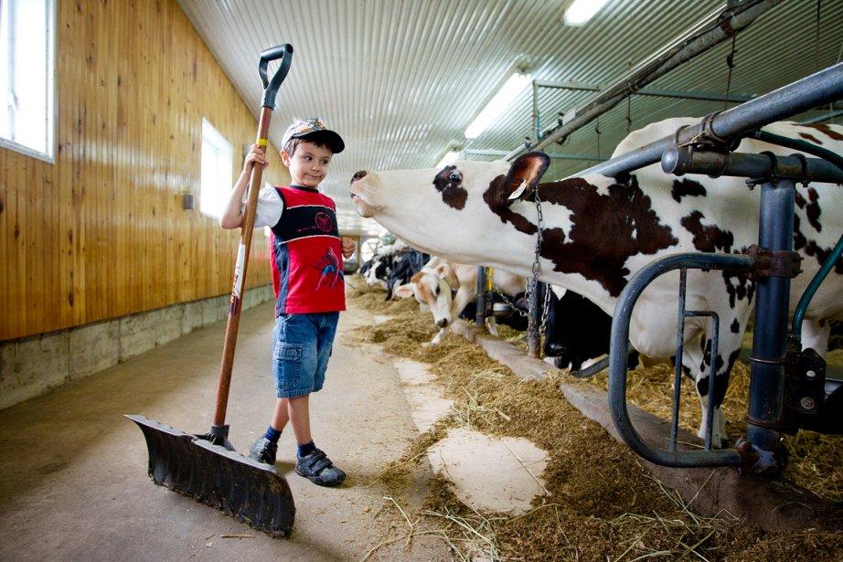 Charles Limoges a fréquenté un camp de jour original l'été dernier: il a pris soin d'une vache pendant une semaine à la ferme Géobastien, de Sainte-Anne-des-Plaines. «Les enfants vont à l'épicerie acheter du lait, sans savoir d'où il vient, dit le producteur laitier Yvan Bastien. Comme notre ferme est proche de la ville, on a décidé de montrer ce qu'on fait.» Depuis 2008, l'étable a ouvert ses portes à 800 enfants de 5 à 12 ans. | 18 décembre 2012