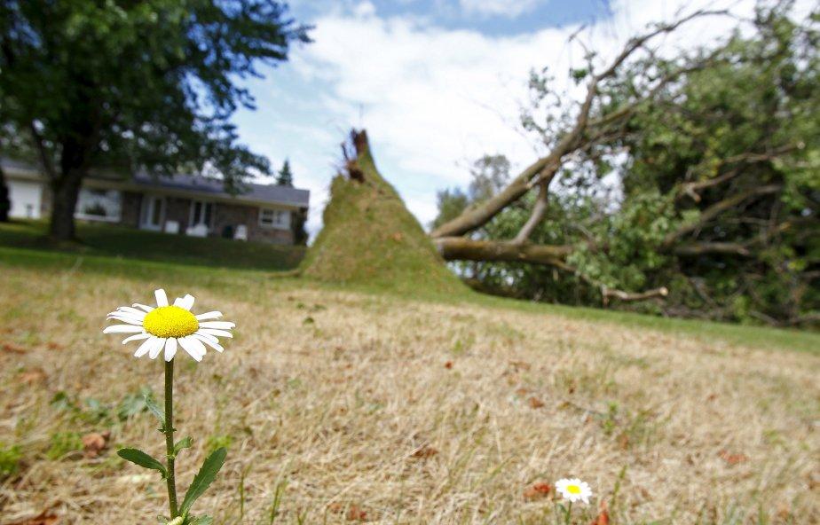 La fleur a résisté aux grands vents du mois d'août à Sainte-Catherine-de-la-Jacques-Cartier, mais pas le grand arbre. | 19 décembre 2012