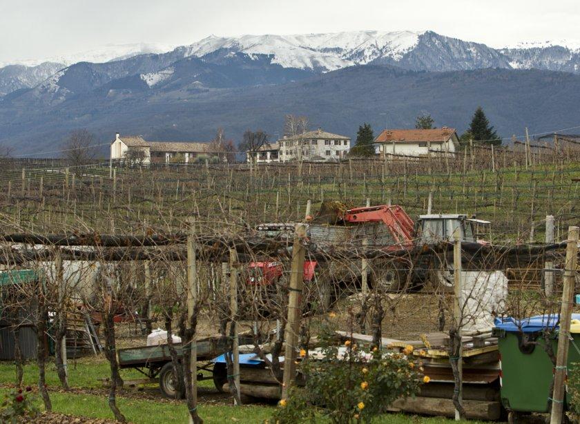 Le vignoble Barichel, devant les Dolomites. (Martin Chamberland, La Presse)