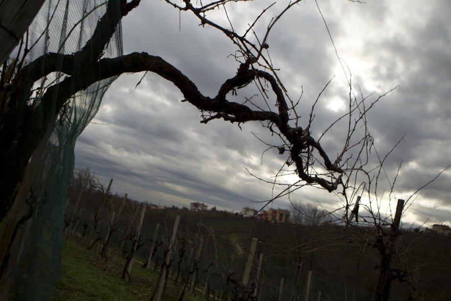 À Vialdobbiadene, on profite de la saison froide pour émonder les vignes. | 19 décembre 2012