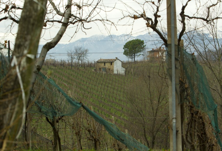 Un autre vignoble de Vialdobbiadene, où chaque hectare  peut être vendu un million de dollars. | 19 décembre 2012