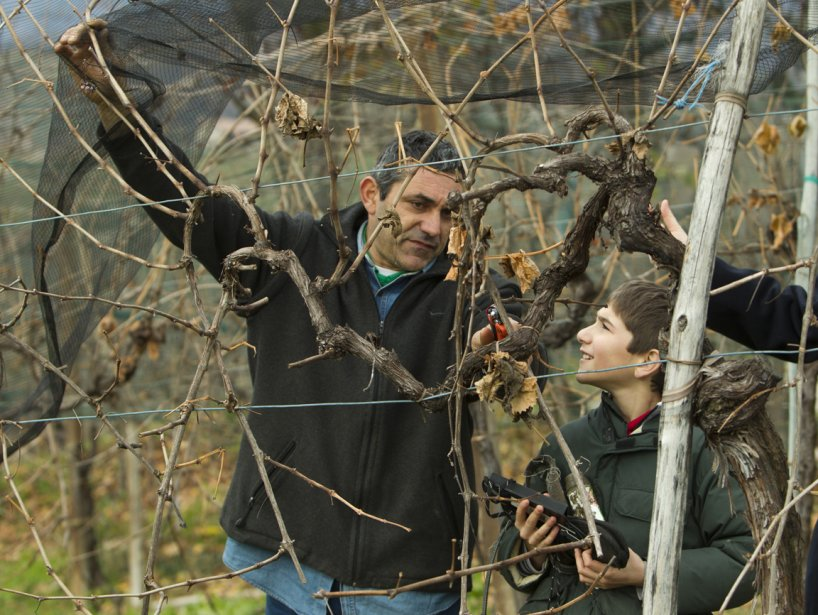Le filet les protégera les vignes des grêlons. (Martin Chamberland, La Presse)