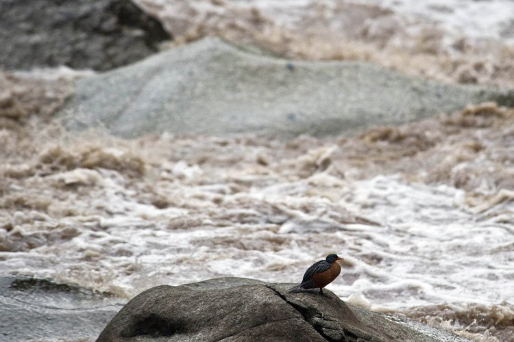 Vue du fleuve Vilcanota.... (Photo: AFP)
