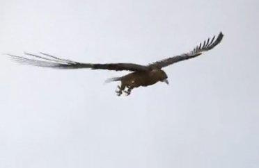 Un aigle, un bébé, un projet d'étude original et près de 20 millions de...