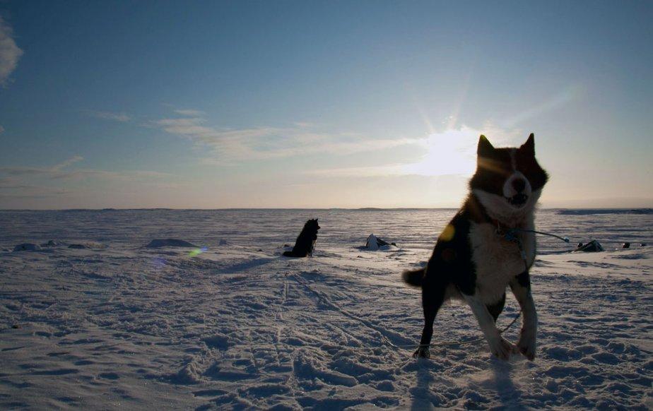 C'était l'avant-dernière journée de son reportage au Nunavik, en février, je n'avait toujours pas sa photo de chiens dans la neige. «Je suis sorti en fin d'après-midi, quand la lumière était la plus belle, juste avant qu'on donne à manger aux chiens. Je cherchais à obtenir une belle silhouette devant le soleil. Je suis resté une demi-heure, il faisait moins 30°, et ma caméra a gelé...» | 21 décembre 2012