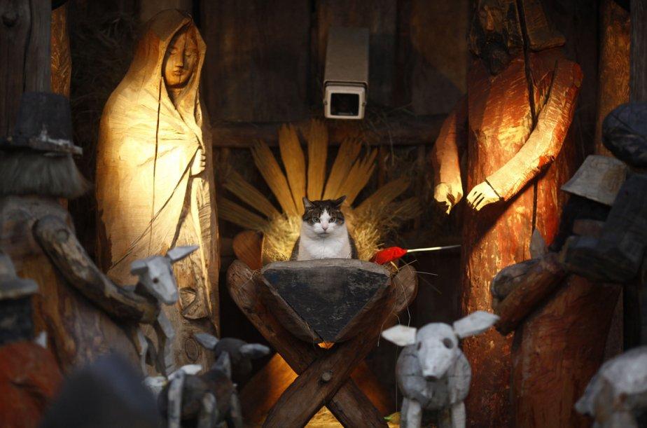 Un chat dans une crèche à Varsovie en Pologne. | 28 décembre 2012