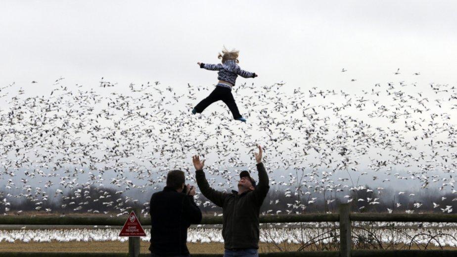 La petite Willow Mooney est lancée à bout de bras par son père lors de la migration des oies blanches dans l'état de Washington. | 28 décembre 2012
