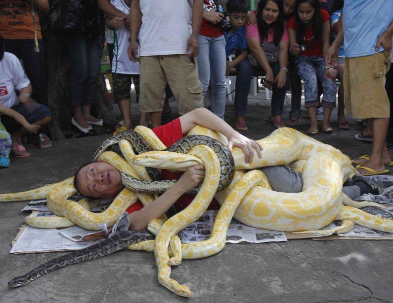 Un artiste de la rue et ses pythons en spectacle à Malabon City aux Philippines | 28 décembre 2012