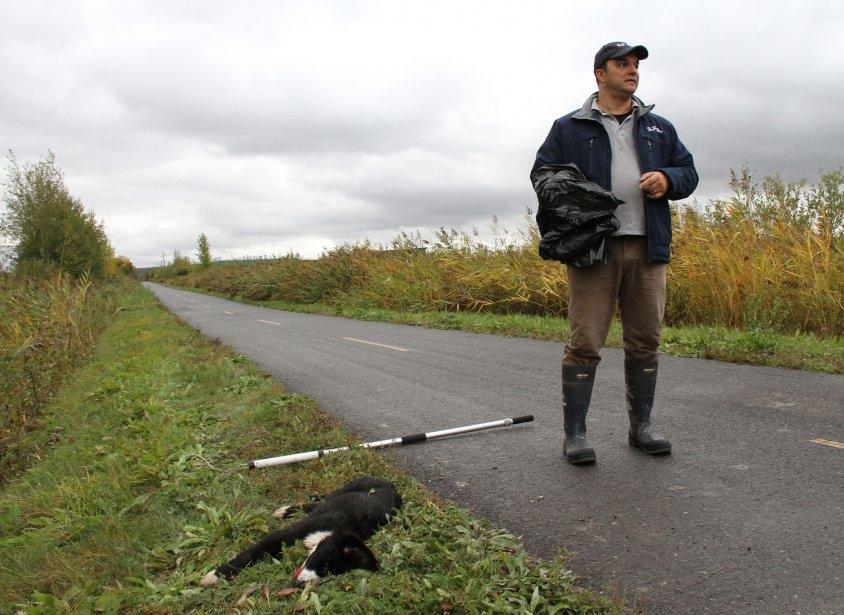 Les chiens errants de la piste cyclable. L'histoire qui nous... | 2013-01-03 00:00:00.000