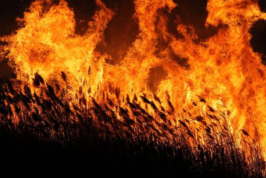 Dans le feu de l'action ? Oui, mais quand même. Quand le feu porté par des vents forts court plus vite que le photographe... St-Alphonse, novembre 2012. | 3 janvier 2013
