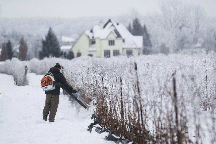 Vendanges hivernales au vignoble Rivière du Chêne. Daniel Lalande, propriétaire du vignoble. (Photo: Edouard Plante-Fréchette, La Presse)