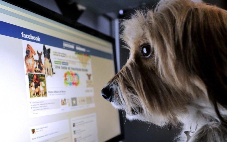 Un Facebook pour chien!?! | 4 janvier 2013