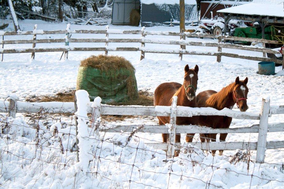 Christian Madore se sent inspiré lorsque la nature revêt son manteau blanc à Saint-Philippe-de-Néri, près de Kamouraska. | 4 janvier 2013
