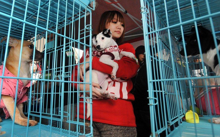 Une bénévole d'un groupe de protection des animaux tient un chien errant après le «mariage» symbolique de deux chiens et de deux chats adoptés à Taipei. Le «mariage» visait à inciter le public à adopter des animaux errants au lieu d'en acheter. | 7 janvier 2013