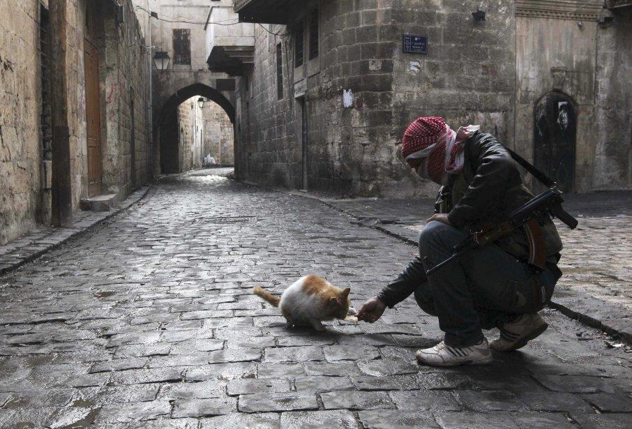 Un combattant de l'Armée syrienne libre nourrit un chat dans la vieille ville d'Alep. | 7 janvier 2013