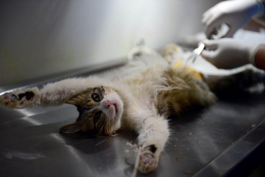 Stérilisation pour ce chat à Mexico City. | 11 janvier 2013