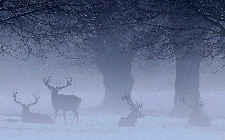 Cerfs dans le parc Wollaton à Nottingham, en Angleterre.... | 2013-01-15 00:00:00.000