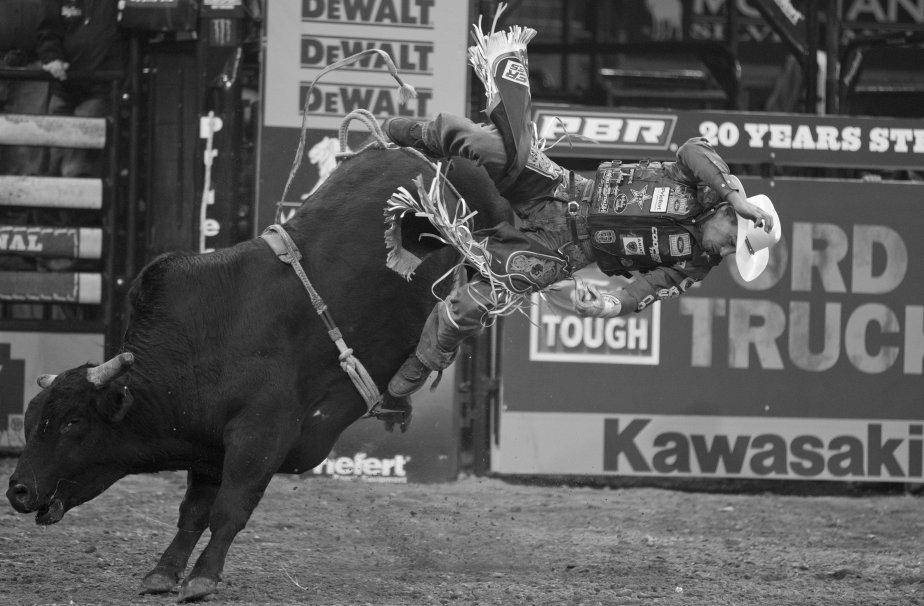 Les concurrents doivent rester sur le taureau pendant huit secondes pour gagner le grand prix. | 18 janvier 2013