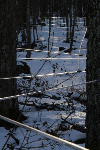 L'eau d'érable coule déjà à l'érablière Côté Lataille de Roxton Pond. | 18 janvier 2013