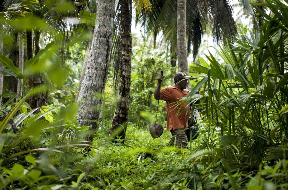 Les Kunas échangeaient auparavant des noix de coco contre de la nourriture en conserve que leur vendent régulièrement des commerçants colombiens, mais ces derniers ne veulent plus que des dollars américains. (Photo: Matthieu Rytz, collaboration spéciale)