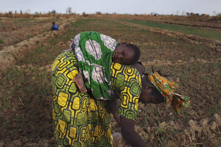 Bintou Samake plante des graines avec son fils Mahamadou sur son dos | 23 janvier 2013