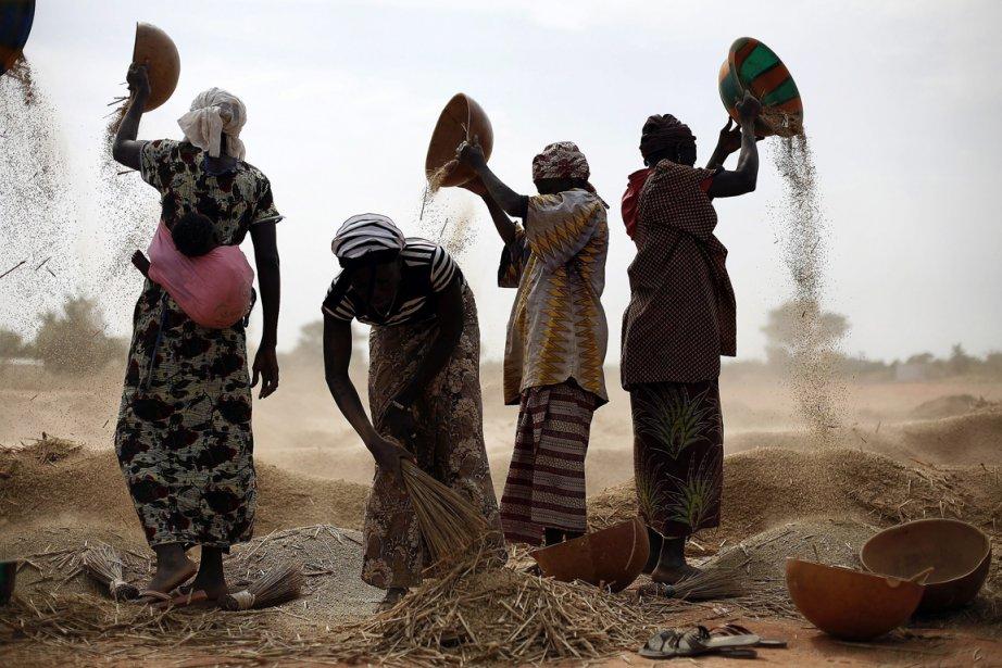 Récolte de grains près de Segou. | 23 janvier 2013