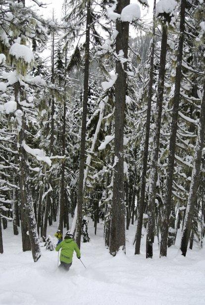 Un moniteur dans la piste Arthurs Choice avec ses arbres géants. | 28 janvier 2013