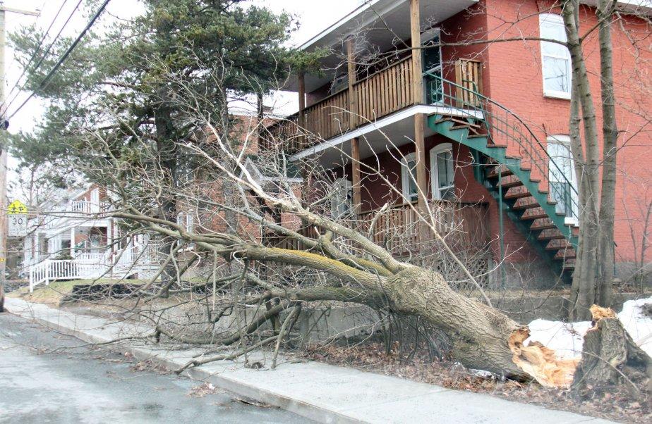 Des rafales de vent on causé passablement de dommages dans la région, le jeudi 31 janvier. | 1 février 2013