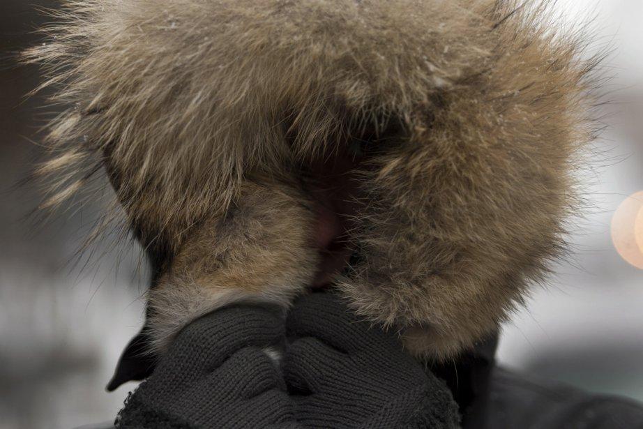 Danielle Katz, de l'organisme PETA, fait valoir que... (Photo : Ryan Remiorz, La Presse Canadienne)