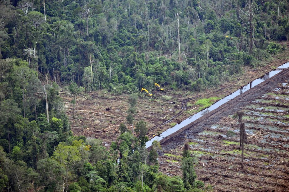 Image de la déforestation par Asia Pulp and Paper,... (Photo Romeo Gagad, AFP)