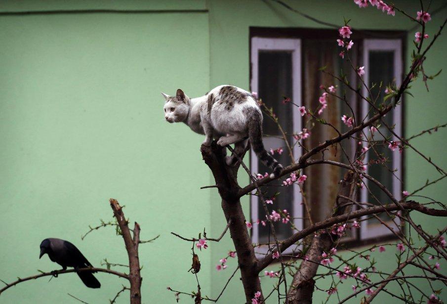 Un chat perché, à Katmandou. | 6 février 2013