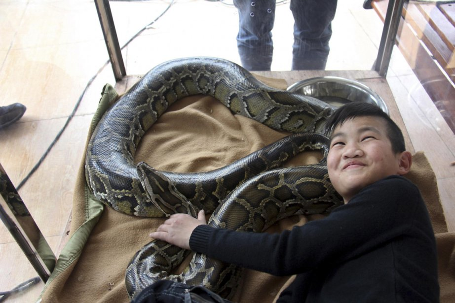 Li Tianzeng, 11 ans, en compagnie de son python, serpent qu'il a depuis sa naissance. Durant 15 jours, le garçon tentera de vivre avec son «animal domestique» à l'intérieur d'une cage de verre afin de battre le record Guinness pour la plus longue cohabitation avec un python, dans le cadre du Nouvel An lunaire. | 8 février 2013