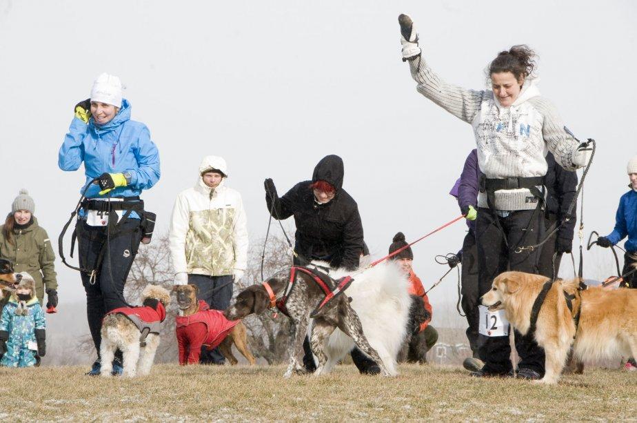 Compétition de canicross à Bromont. | 8 février 2013