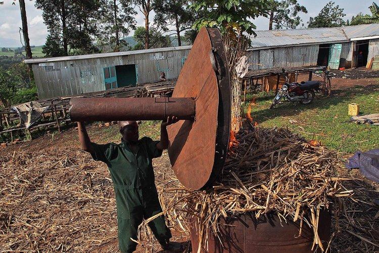 Un ouvrier brûle du déchet de canne à... (Photo: AFP)