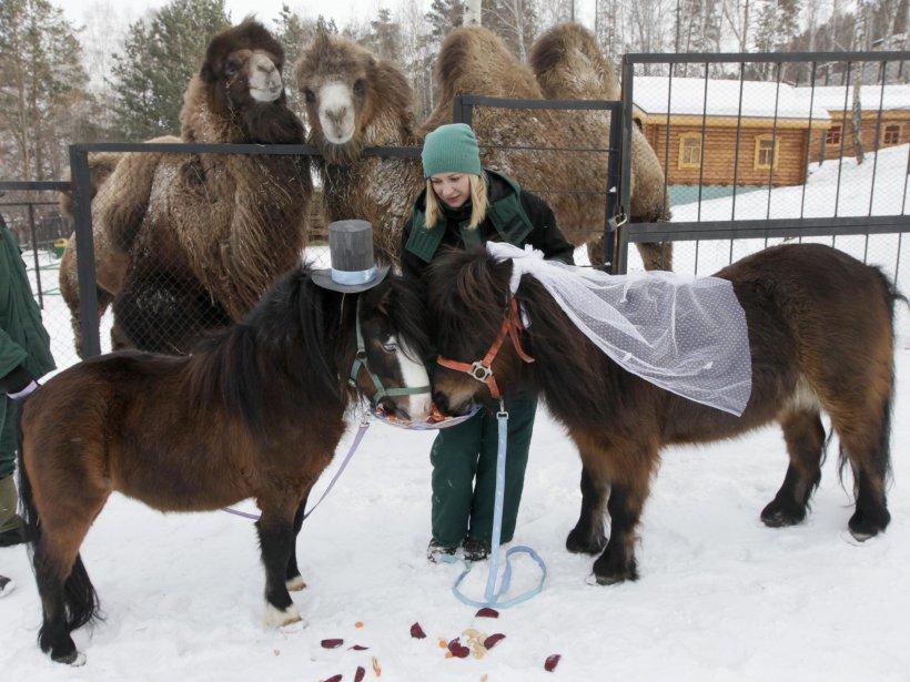 Krasnoyarsk, en Russie. | 14 février 2013