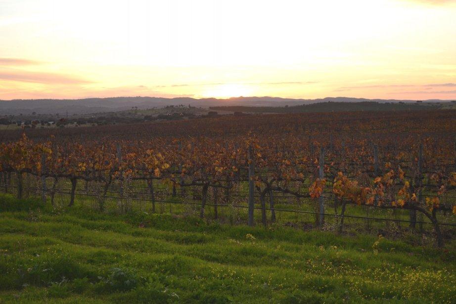 Le paysage viticole de l'Alentejo... (Photo Karyne Duplessis-Piché, La Presse)